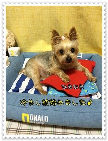 20140609_2.JPG