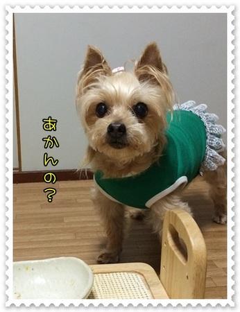 20140708_4.JPG