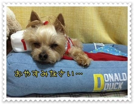 20140713_9.JPG