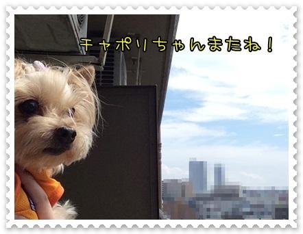 20140720_1.JPG
