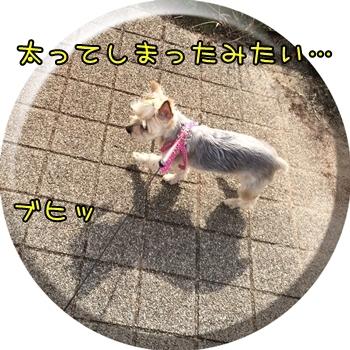 20150920_4.JPG